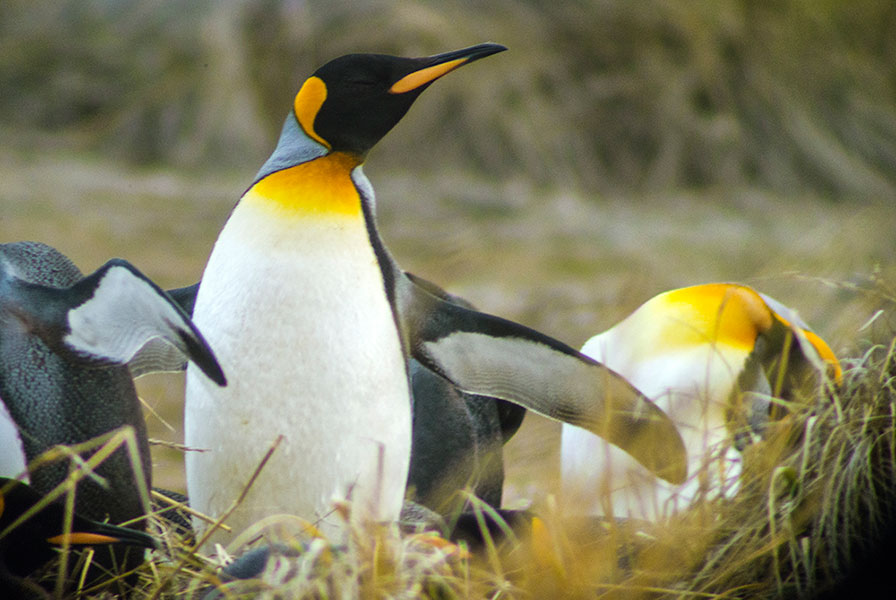 Patagonia Chile